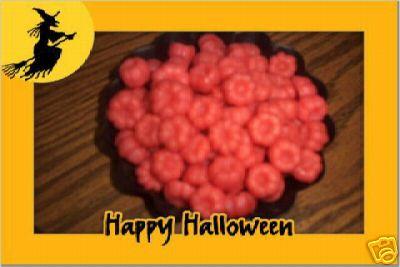 50 Pudka Pods Mini Pumpkins