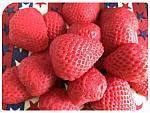 25 Wax Strawberry Halves